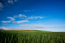 Wheat and Sky by Michael Kloth