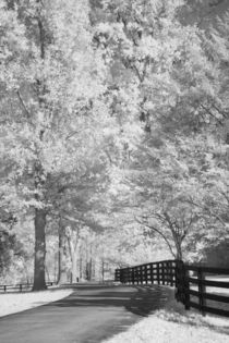 Michael-kloth-path-with-fence-and-trees-1240