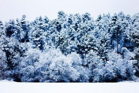 White-landscape