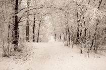 Winter park 2 by Alexandr Verba
