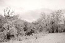 Winter park 6 by Alexandr Verba