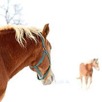 horse // warmth von Eva Stadler