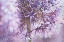 Sterne des Sommers von Ursula Pechloff