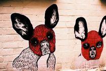 Dogs by Giorgio Giussani