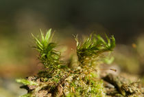 Moss on a trunk von Andreas Müller