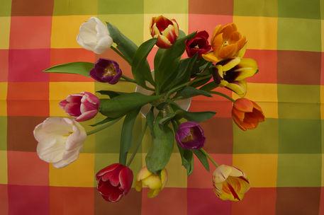 Tulip-checkers