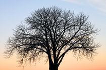 Thetree-chrisradl
