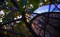 Tree O Clock von Damien Yoccoz