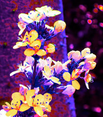 Floral Design von Margaret Saheed