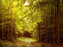 Waldspaziergang by Heidrun Carola Herrmann