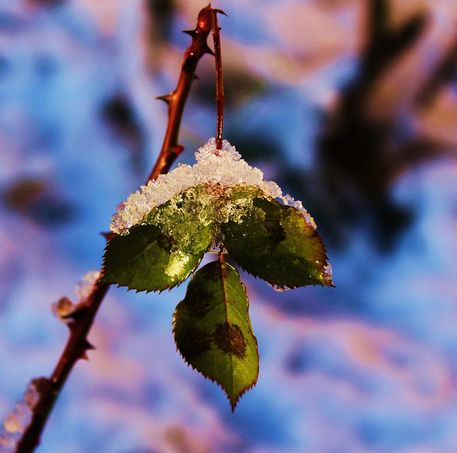 Snowy-pictures-078