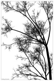 Minimalisttree
