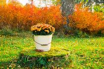 Flowers in a bucket in autumn by kbhsphoto