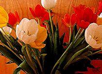 Tulpen von wokli