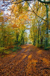 Autumn in a forest von Wicek Listwan