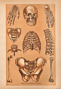 Parts of the human skeleton by Mark Strozier