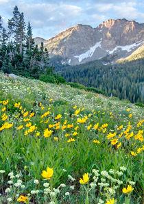 Alpine Wildflowers by Douglas Pulsipher