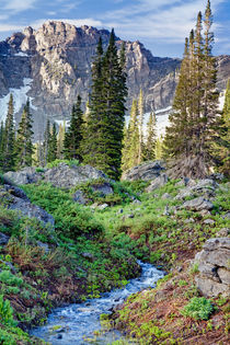 Mountain Stream by Douglas Pulsipher