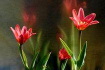 Tulpen by tinadefortunata