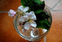 Kirschblüten im Glas von tinadefortunata
