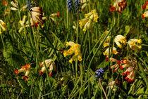 Frühlingswiese by tinadefortunata