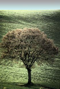 Fresco Tree von David Halperin