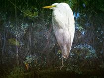 Swamp Bird by Robert Ball