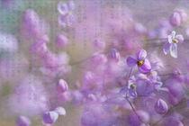 Blütentanz von Ursula Pechloff