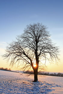Winterabend by Wolfgang Dufner