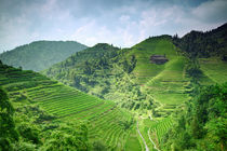 Rice terraces by Alexey Galyzin