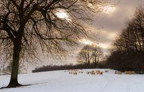 Printcopy-sheeps-2