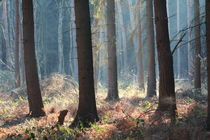 Zauberwald by © Ivonne Wentzler