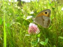 Butterfly Resting von Charlotte Cushway