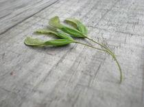 Seed by Charlotte Cushway