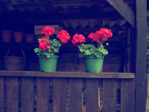 Flowers on a Fence [vintage] von Charlotte Cushway