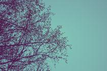 Tree Silhouette by Charlotte Cushway
