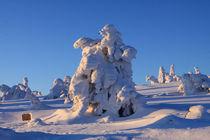 Winterlandschaft am Brocken im Harz 17 von Karina Baumgart