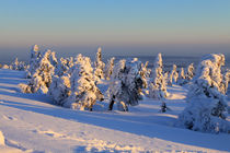 Winterlandschaft am Brocken im Harz 18 by Karina Baumgart