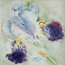 Iris in blue by Katia Boitsova-Hošek
