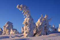 Winterlandschaft am Brocken im Harz 21 by Karina Baumgart