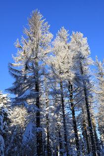 Winterlandschaft im Wald von Karina Baumgart