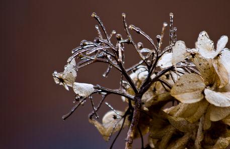 Ice-rain-on-flower-neutral-col-v1-10-2-12
