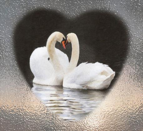 Swans-heart