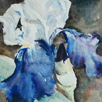 Blue iris von Katia Boitsova-Hošek
