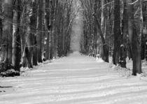 Schneeallee von oliver-b