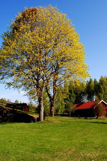 Frühling auf dem Land von tinadefortunata
