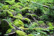 Waldboden von tinadefortunata