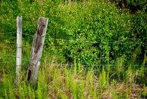 grün by tinadefortunata