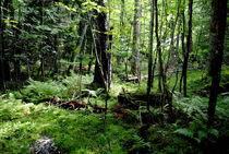 im Wald von tinadefortunata