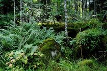 Märchenwald von tinadefortunata